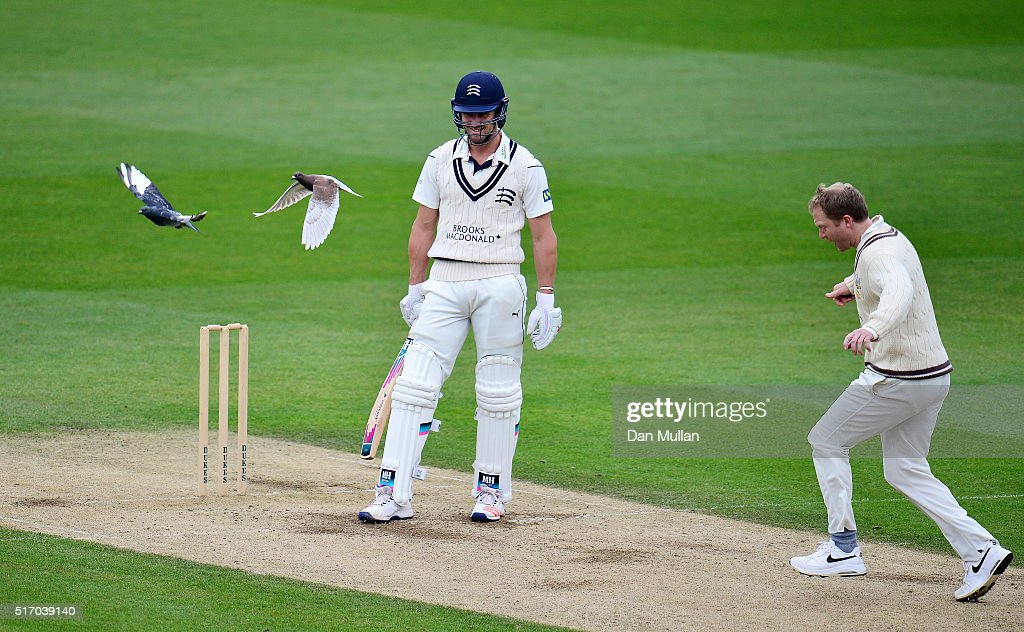 Nick Compton of Middlesex (L) looks on as Gareth Batty of Surrey clears two pigeons off the wicket during day two of the pre-season friendly between Surrey and Middlesex at The Kia Oval on March 23, 2016 in London, England.