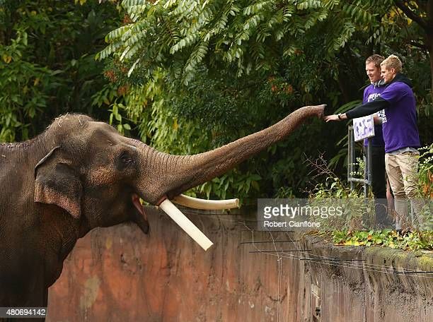Nick Riewoldt of the Saints and Jack Riewoldt of the Tigers meet elephant Bong Su, the largest animal in Australia during an AFL media opportunity at...