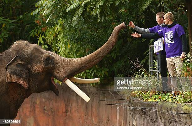 Nick Riewoldt of the Saints and Jack Riewoldt of the Tigers meet elephant Bong Su the largest animal in Australia during an AFL media opportunity at...