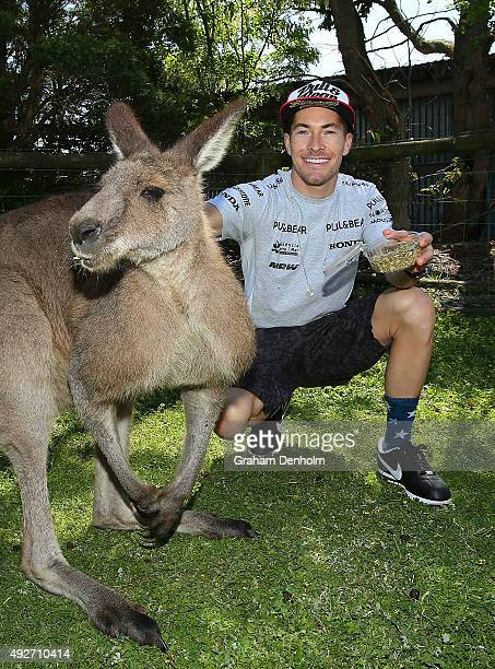 Nicky Hayden of USA and Drive M7 Aspar feeds a kangaroo ahead of the 2015 MotoGP of Australia at Phillip Island Grand Prix Circuit on October 15 2015...