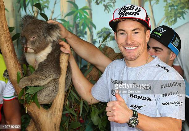 Nicky Hayden of USA and Drive M7 Aspar poses with a koala bear ahead of the 2015 MotoGP of Australia at Phillip Island Grand Prix Circuit on October...