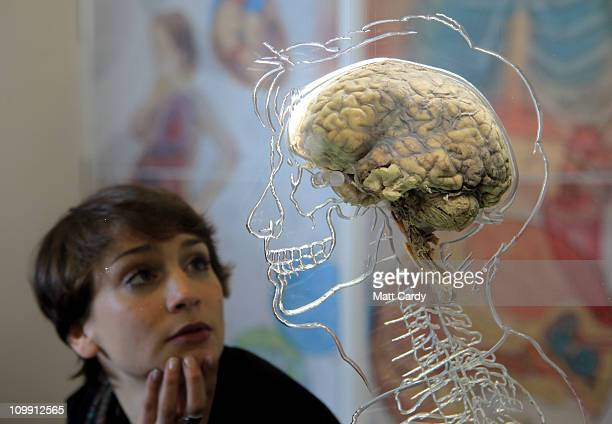 Nicole Briggs looks at a real human brain being displayed as part of new exhibition at the @Bristol attraction on March 8 2011 in Bristol England The...