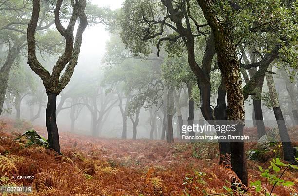 niebla en los alcornocales - cádiz fotografías e imágenes de stock