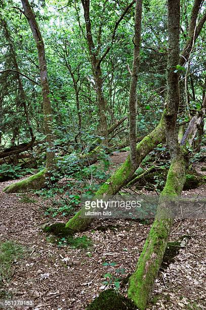 Niederlande, Assen: Die Natur in Friesland im Gebiet von Drente ist vielfaeltig und abwechslungsreich . Hier wechseln Waldgebiete, Heide-und...