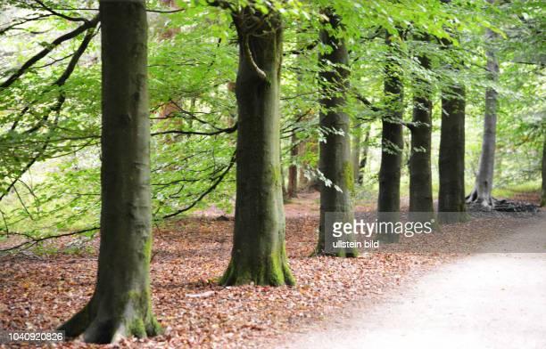 """Niederlande, Hooge Veluwe: Charakter eines Vorbildes fuer die Behandlung der Natur hat der niederlaendische Nationalpark """"Hooge Veluwe"""" hier am ."""