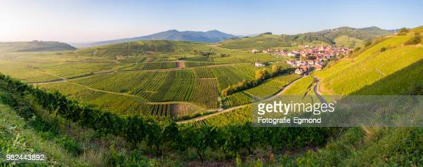 niedermorschwihr panorama - lorraine stock pictures, royalty-free photos & images