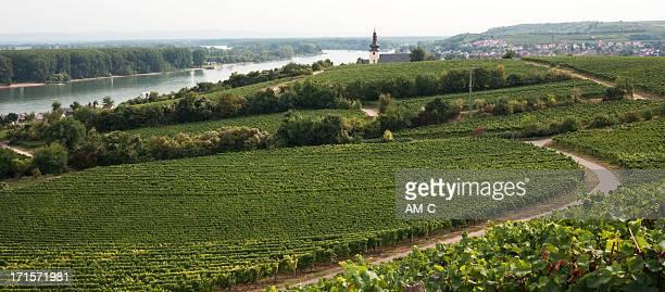 Nierstein, Weingüter, den Rhein, Rhein, Deutschland