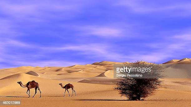 Niger desert