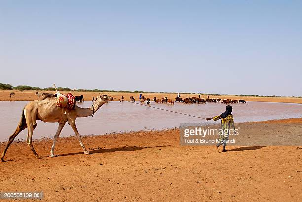 Niger, Tahoua, Peul Nomad camp, boy leading camel by river