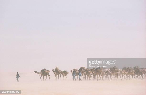 niger, tenere desert, traditional salt caravan of tuareg tribe - niger stockfoto's en -beelden
