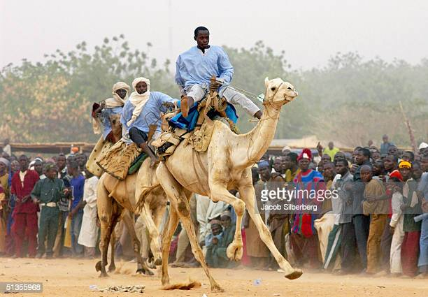 Nigerian men race camels during the Argungu Fishing Festival on March 18 2004 in Argungu Nigeria The Argungu Fishing Festival was first held in 1934...