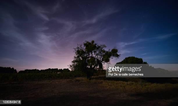 night backlight moon tree night sky - luz de la luna fotografías e imágenes de stock