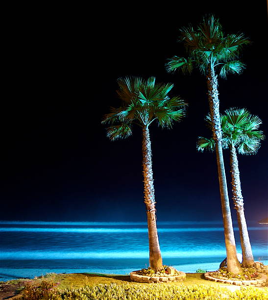 Night Beach Del Mar