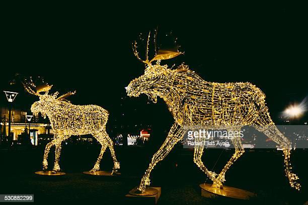 Night elks in Stockholm