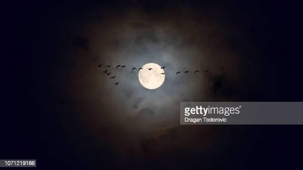night flight - luna llena fotografías e imágenes de stock
