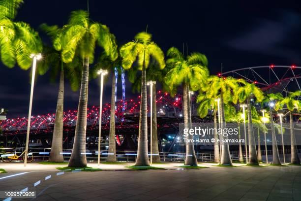 Night illuminated palm tree and bridge on Marina Bay in Singapore