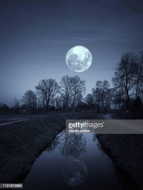 noche en un parque con luna llena - luz de la luna fotografías e imágenes de stock