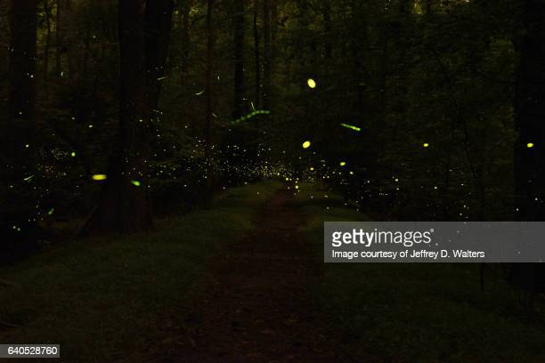 night lights - fireflies stock pictures, royalty-free photos & images