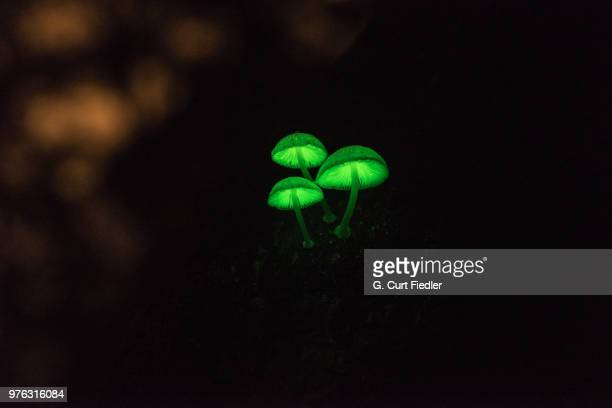 night lights - bioluminescence stock pictures, royalty-free photos & images