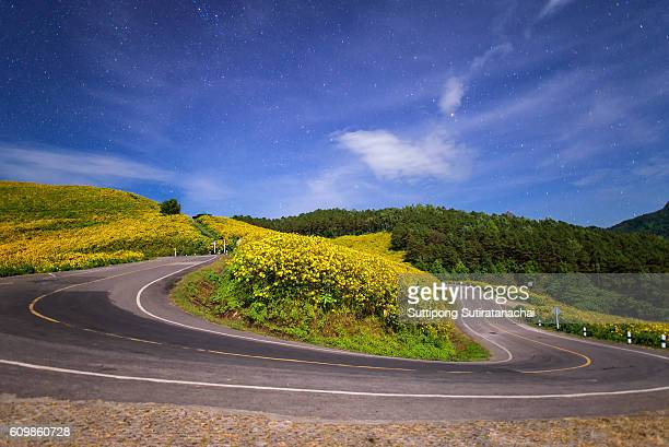 Night scene of beautiful road in mountain valley of mexican sunflower with sky and star