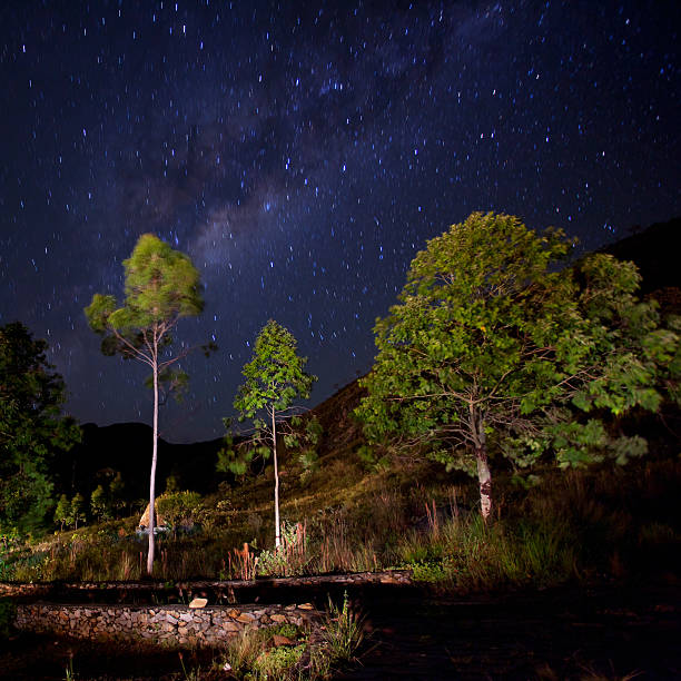 Night scene with trees and milky way