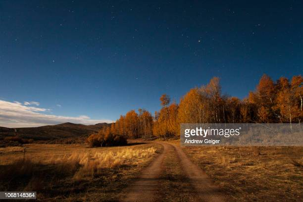 pov night shot of gravel road and aspen trees lit by moon light with stars and misty clouds. - ワイドショット ストックフォトと画像