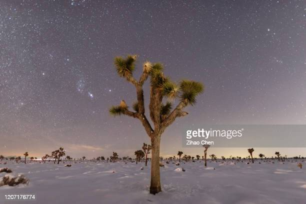 night sky above joshua trees - joshua tree national park stock pictures, royalty-free photos & images