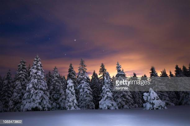 night sky above winter forest - spruce tree stock pictures, royalty-free photos & images