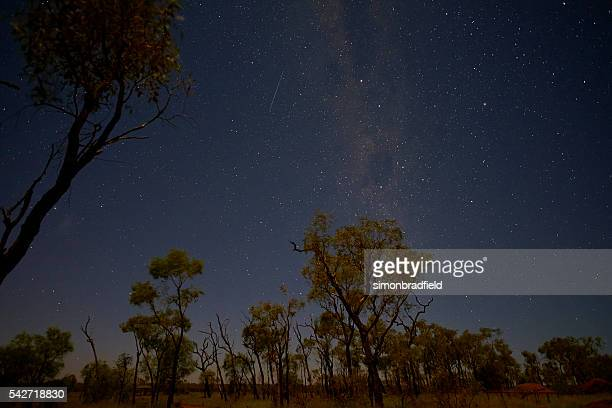 Night Sky Over Eucalyptus Trees At Uluru