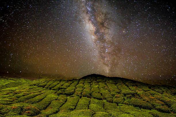 Night Sky Over Tea Plantation