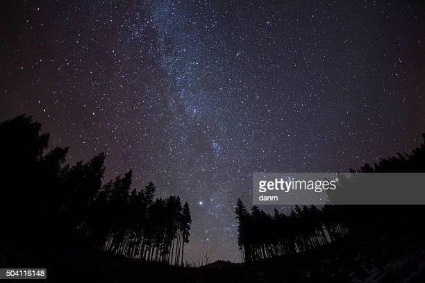 night sky with stars and trees - berühmte persönlichkeit stock-fotos und bilder