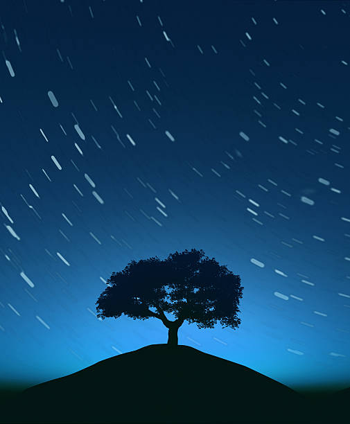 Night sky with tree and moving stars