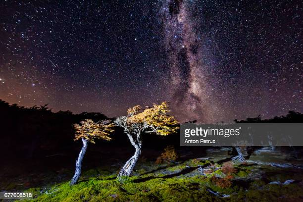 Night starry sky over trees. Patagonia, Argentina
