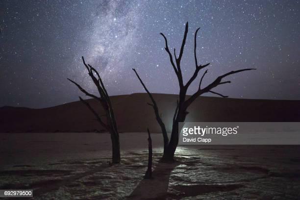 Night time, amel thorn trees in Deadvlei, Sossusvlei in Namibia