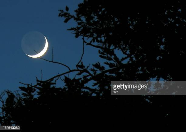 Night time view of a quarter moon though branches