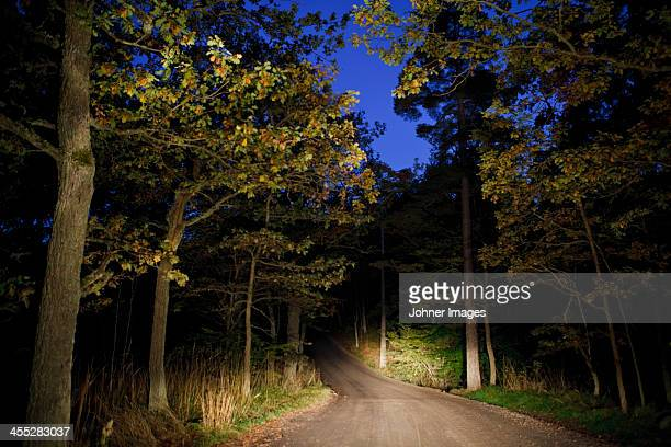 Night view of forest