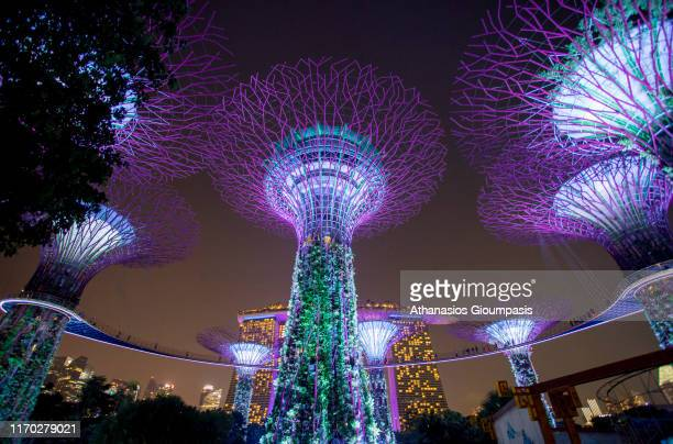A night view of The Supertree Grove at Gardens by the Bay at the sunset on August 17 2019 in Singapore