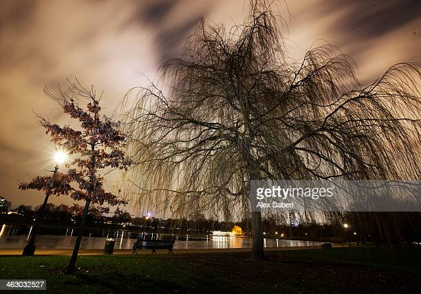 nighttime in hyde park, london. - alex saberi stock pictures, royalty-free photos & images