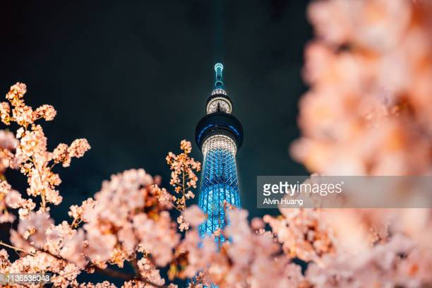 nightview of cherry blossom and sakura with tokyo skytree in japan. - famous place stock pictures, royalty-free photos & images