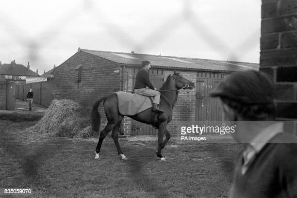 'Nijinsky' out for an airing in the Doncaster Yard today seen through the security fencing erected around the whole stables