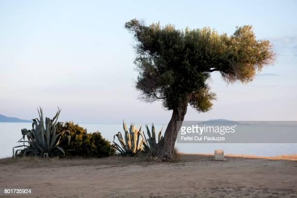 nikiti beach in sithonia peninsula, halkidiki, central macedonia, northern greece - peninsula de grecia fotografías e imágenes de stock