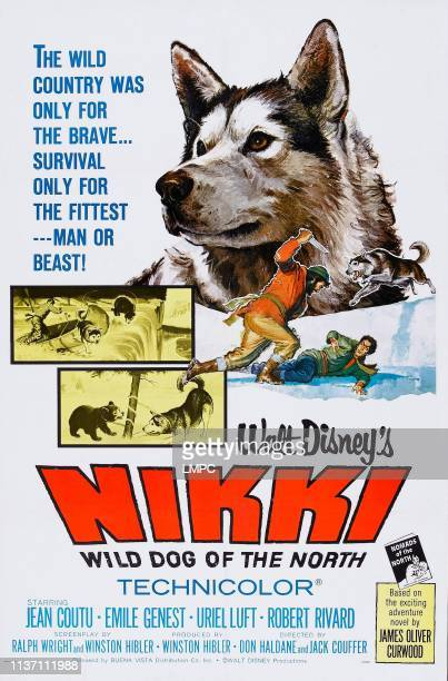 Nikki poster WILD DOG OF THE NORTH US poster art 1961