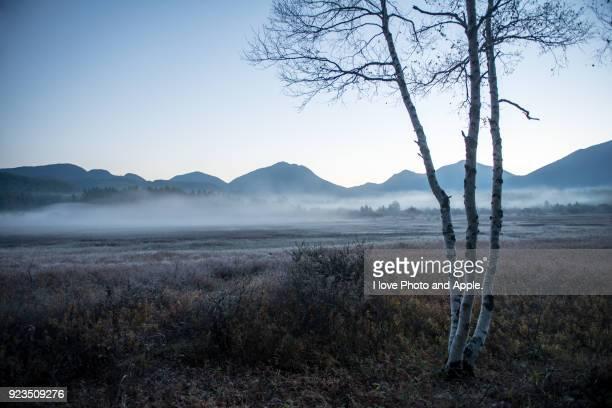 nikko autumn scenery, odashirogahara - árvore de folha caduca - fotografias e filmes do acervo