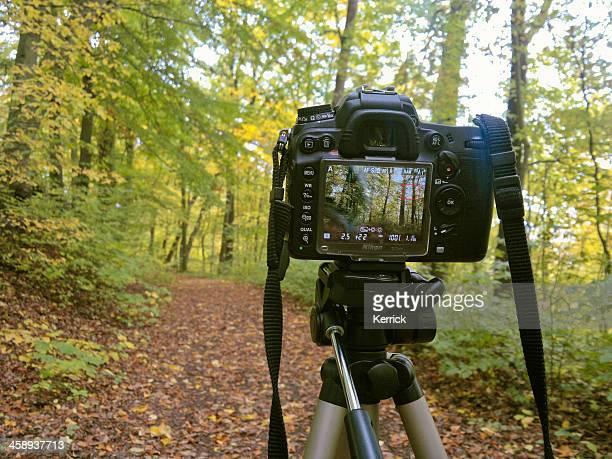 nikon camera on tripod - nikon stock pictures, royalty-free photos & images