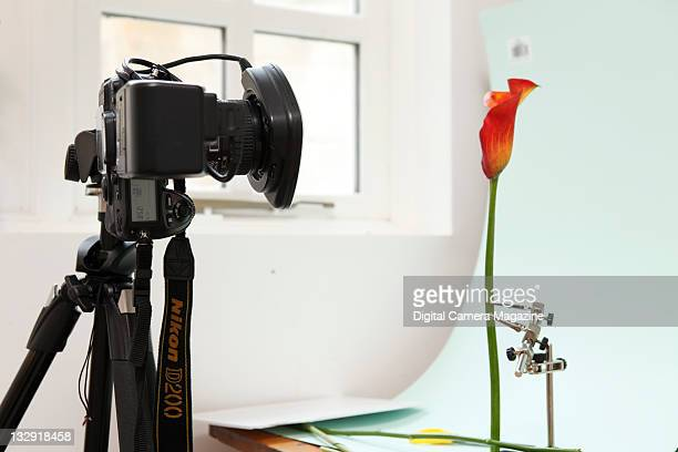 Nikon D200 camera and Sunpak ringflash set up in a makeshift home studio to shoot professional-looking still life images of flowers, Bath, January...