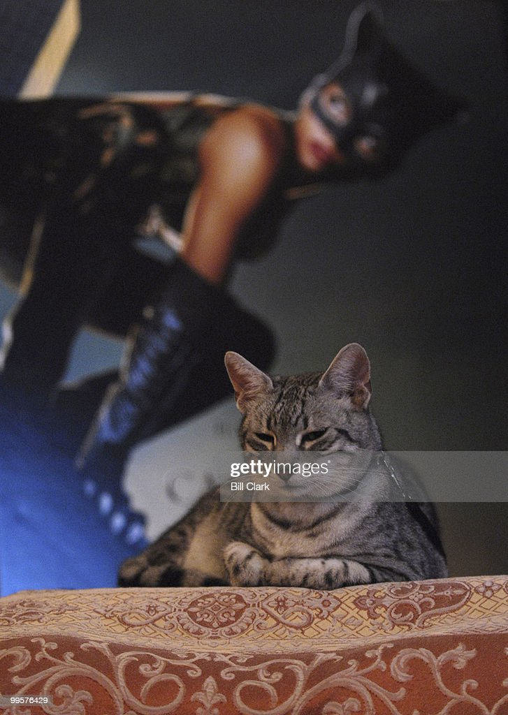 Nile, also known as Midnight in the movie 'Catwoman' posed for photos with attendees at the 10th Annual Pet Night on Capitol Hill.