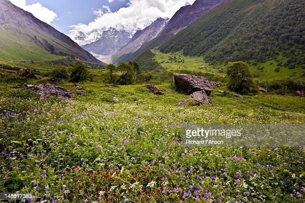 Nilgiri Parbat (6474m) and flower meadow in Bhyundar Valley.