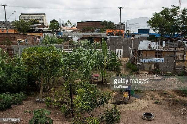 Nilson Gomes 51 lived on the street when he decided to build a wooden house in Favela VilaSul in the State hinterland of Pernambuco Brazil on 19...