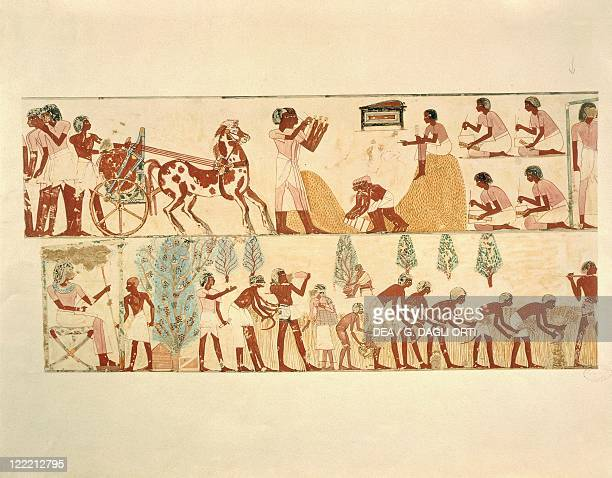 Nina M Davies 'Ancient Egyptian Painting' Chicago1936 Plate farm work wheat harvest and scribes recording amount of crop Replica of fresco from...