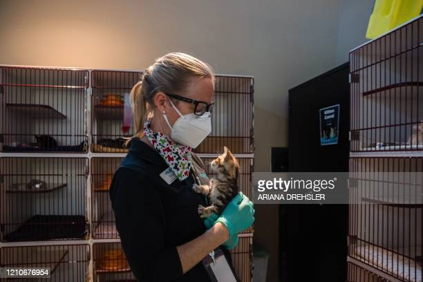 Nina Thompson, the Communications Manager at the San Diego Humane Society, holds a kitten at the kitten nursery in San Diego, California, on April...